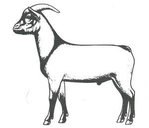 standaard geit